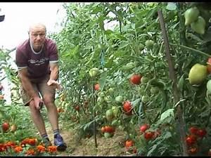 Arrosage Des Tomates : comment r ussir ses tomates youtube ~ Carolinahurricanesstore.com Idées de Décoration