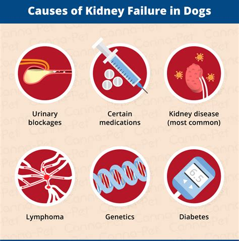 Kidney Failure In Dogs Signs & Causes  Cannapet®. Free Business Analyst Training Online. Cost Of Frontpoint Security System. Laser Eye Surgery Requirements. Mac The Antique Plumber Medical Math Practice. Gre Online Study Guide How To Help Heart Burn. Vmware Copy Virtual Machine Lone Star Title. Business Computer Training Institute. Apply For Federal Employer Identification Number