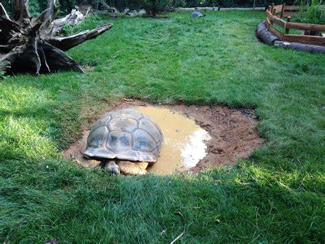 ingresso zoo di pistoia zoo di pistoia tartaruga