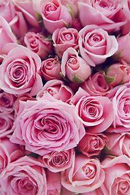 Beautiful Pink Roses Flowers