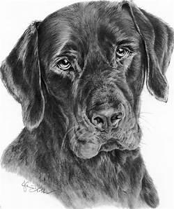 Lab Jack Black Drawing by Janis Hobbs