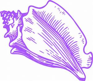 Purple Shell Clipart (10+)