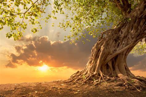 tree of light song まとめ洗いは効果薄 布団クリーニングでダニ退治の注意点