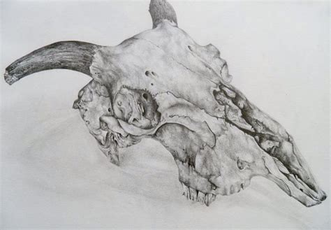 Pencil Tonal Holiday Decor Animal Skulls Skull Sketch