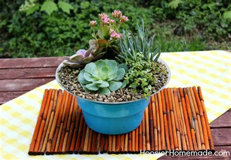 how to build and plant a succulent garden hoosier