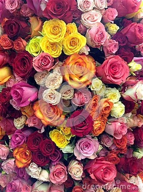 flower power stock photo image