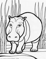Hippo Coloring Pages Hippopotamus Animals Cartoon Colouring Hippos Clipart Animal Printable Cliparts Sheet Safari Colour Library Fiction Non Clip Popular sketch template