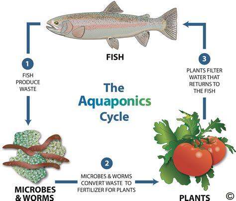 produce sustainable food  home matthew ka ho tsui
