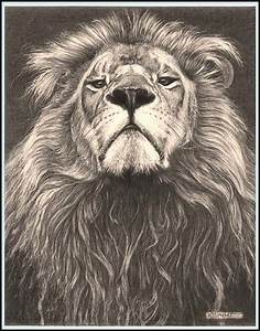 Head of the Family' - Lion - Fine Art Pencil Drawings ...