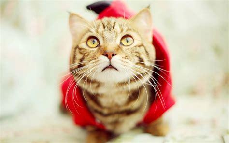 可爱小猫咪图片电脑壁纸免费下载_桌面壁纸_电脑桌面壁纸高清_图片大全_桌面背景壁纸图片_酷图吧壁纸下载
