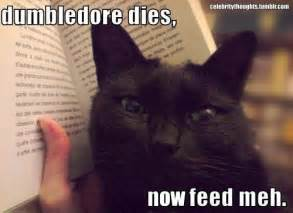 harry potter cat black cat dumbledore harry potter image 422036 on