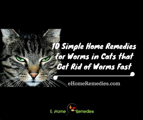 rid  worms  cats cat  dog lovers
