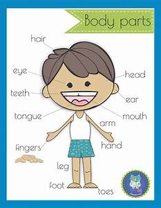 Insect Body Parts Diagram For Kindergarten