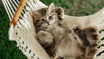 Cats Wallpapers Cat Widescreen Backgrounds Animals Puppy