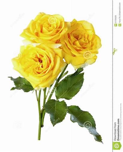 Yellow Roses Bouquet Gele Rozen Rose Flower