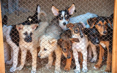 buying dogs  dogslife dog breeds magazine
