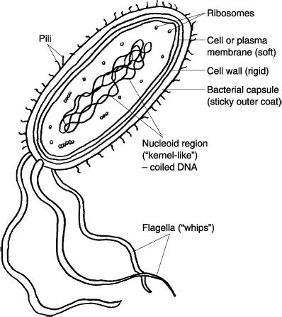 Best Images Labeled Plant Cell Parts Worksheet