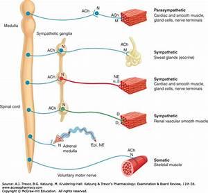 Introduction To Autonomic Pharmacology
