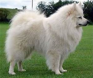 Fluffy Dog Breeds with Pictures and Breed Profiles