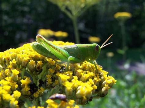 Common Garden Pests Hgtv