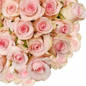 "Natural Fresh Flowers - Light Pink Roses, 20"", 125 Stems ..."