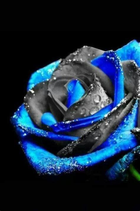 89 Best Cool Roses Images On Pinterest  Beautiful Flowers