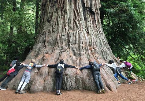 journey   redwoods  portland audubon
