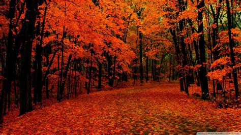 fall path wallpaper 1080p hd colors