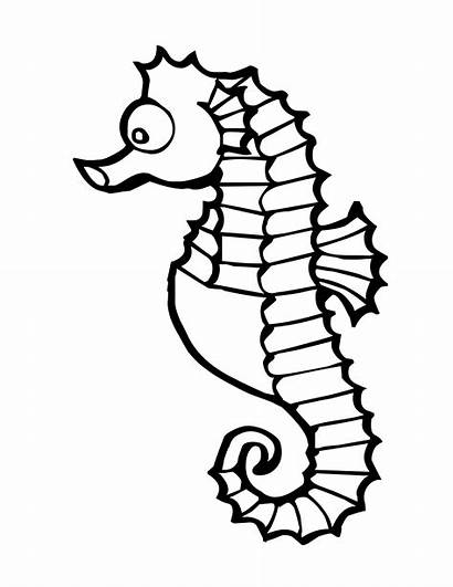 Coloring Sea Pages Animal Marine Animals Horse