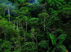 High Resolution Jungle Forest Wallpapers | HD Nature ...