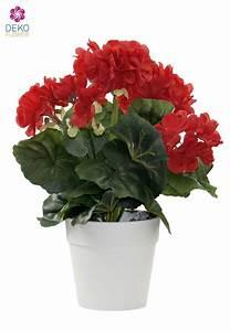 Orchideen Ohne Topf : geranie im topf rot 27cm ~ Eleganceandgraceweddings.com Haus und Dekorationen