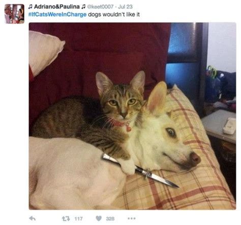 Twitter Weighs In On What Would Happen If Cats Were In
