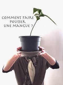 Planter Noyau Mangue : faire pousser une mangue a la maison jardin terrasse ~ Melissatoandfro.com Idées de Décoration