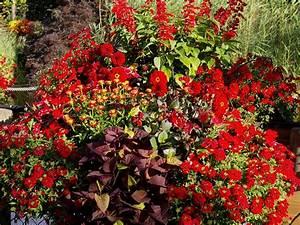 Balkon Ideen Pflanzen : pflanzen ideen f r den balkon ~ Lizthompson.info Haus und Dekorationen
