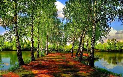 Spring Wallpapers Nature Forest