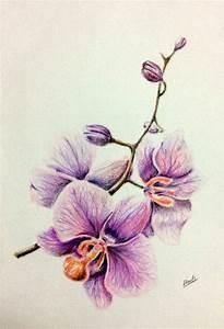 drawing colored pencils orchid рисунок цветные