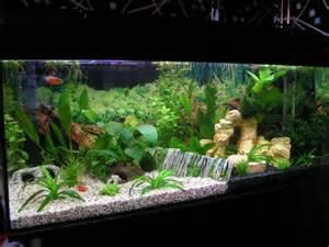 designer aquarien freshwater aquarium aquascape design ideas search aquarium http www