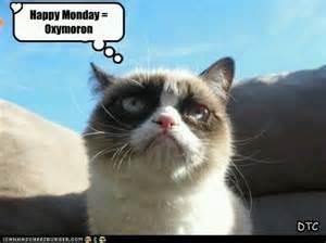 grumpy cat monday quot happy quot monday grumpy cat