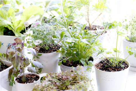 Herb Garden Indoor : Winter Gardening Indoors