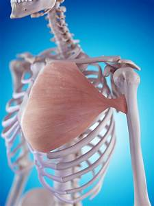 Reader Question  How To Report The Proper Pectoralis Code