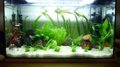 comment faire un aquarium plante faire un rideau de plante dans aquarium comment et quelle solution