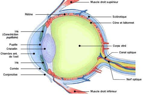 chambre atlas anatomie atlas du corps humain oeil coupe