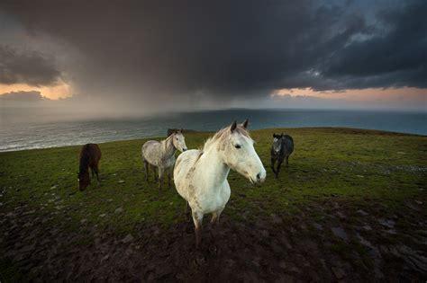 horses  stormy sky  ocean george karbus photography