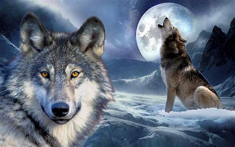 3d Wallpapers Wolf by Wolf Backgrounds Wallpaper Cave
