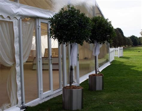 bay trees topiary lollipops hiring plants trees props   clients create special