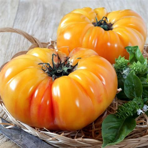 tomato pineapple seeds theseedcollection