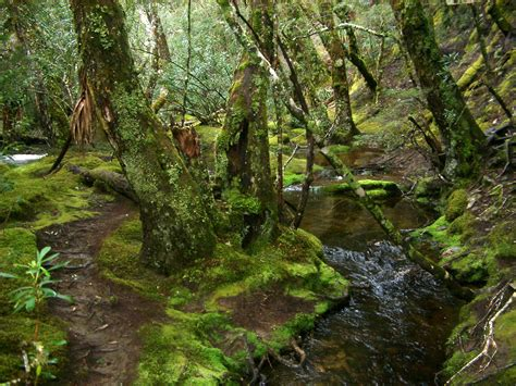 Mossy Wonders On Pinterest Moss Garden Forests And Ferns