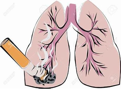 Lung Smoking Lungs Disease Cancer Heart Diseases