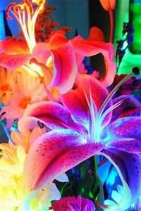 Neon Wallpapers and Neon flowers on Pinterest