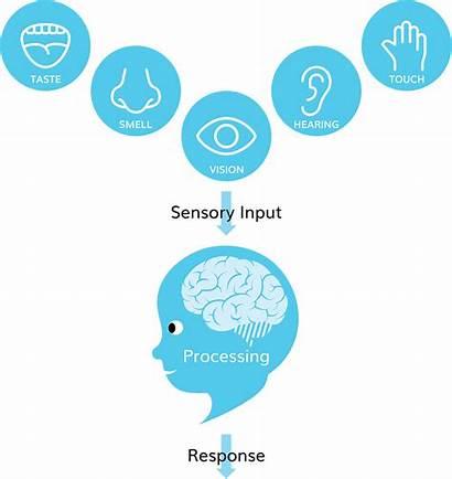 Sensory Processing Vision Brain Bloo Disorder Illust
